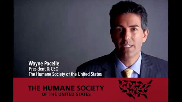 FOX News Airs Latest Round of Attack Ads Exposing HSUS Deception