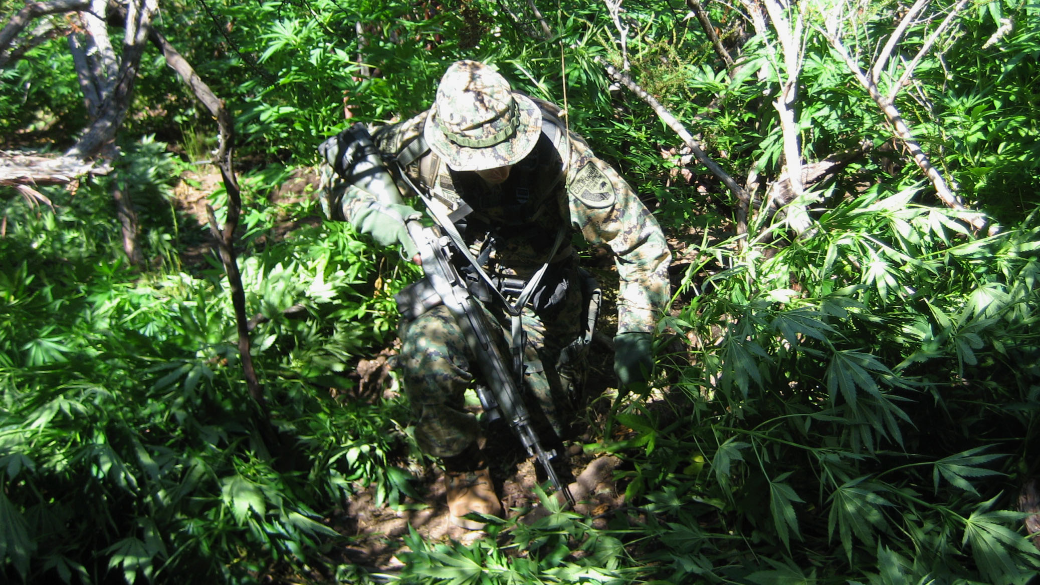 Hunters Continue to Stumble onto Drug Cartel's Illegal Marijuana Grows