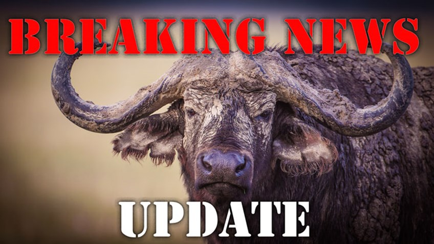 Importers/Exporters of Hunting Trophies Must Act on USFWS Notice by November 22