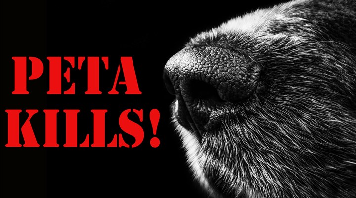 PETA Slaughtered 1,411 Cats and Dogs in 2016