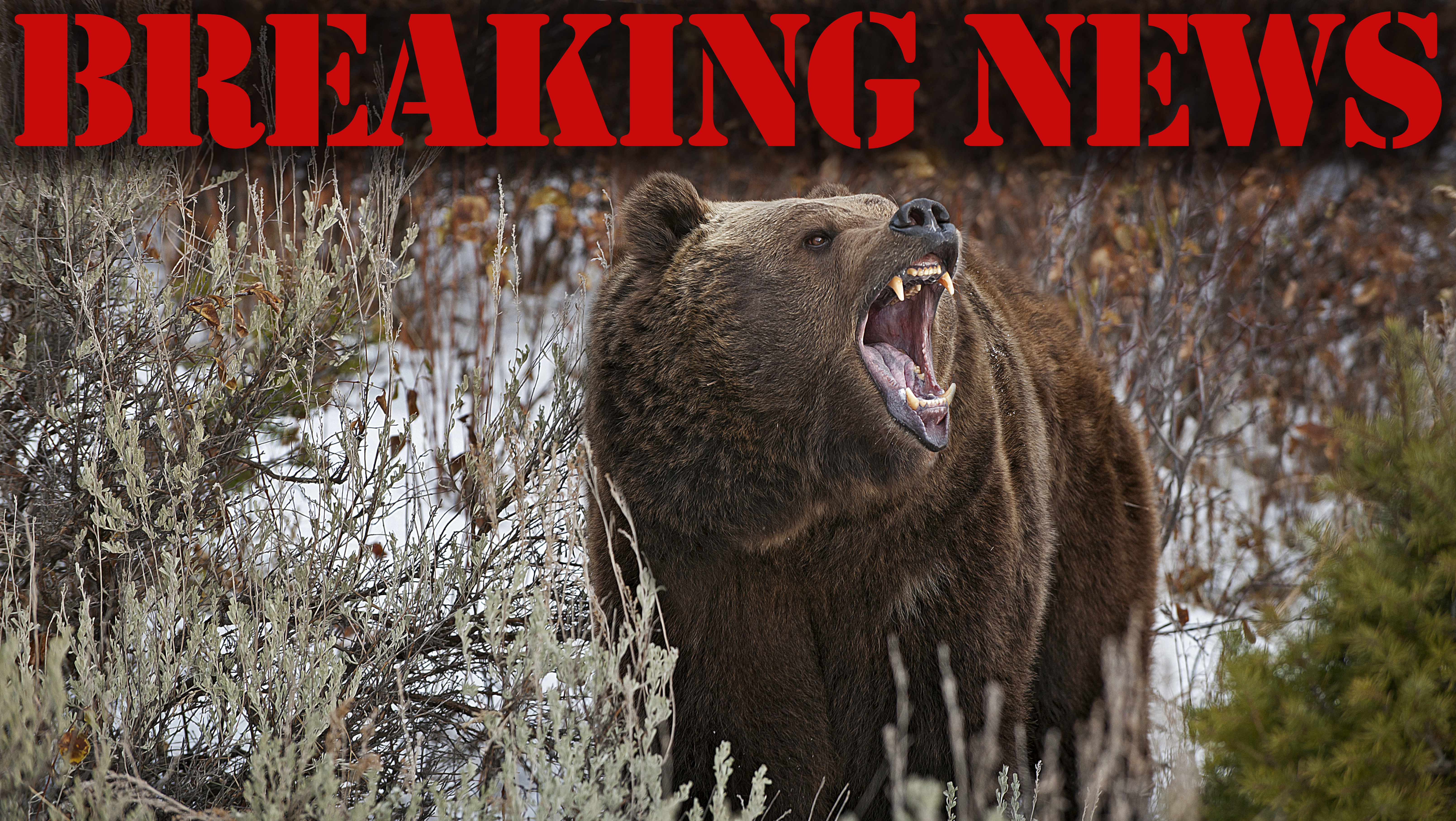 HSUS-Backed Antis Aim to End B.C. Grizzly Hunts on May 9
