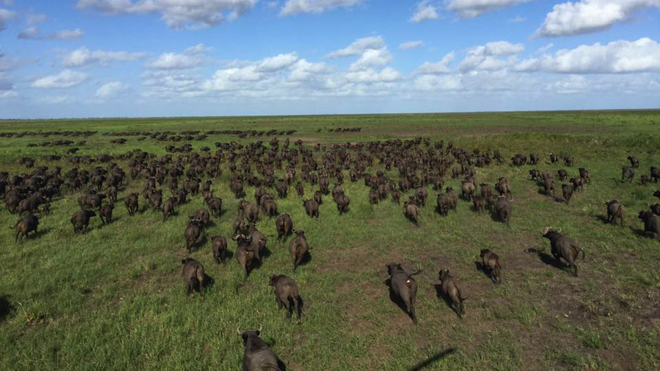 Why Hunting is the Backbone of African Wildlife Conservation