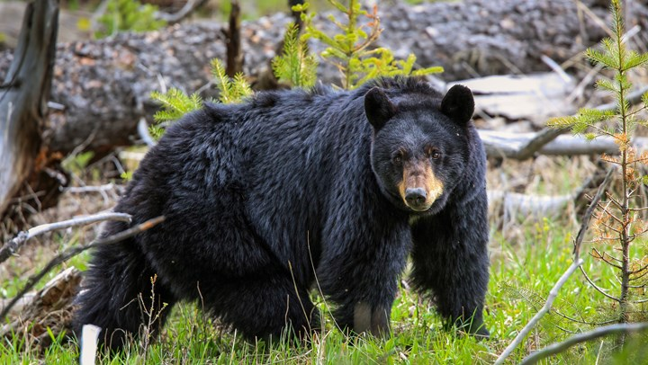 South Carolina to Expand Bear Hunt