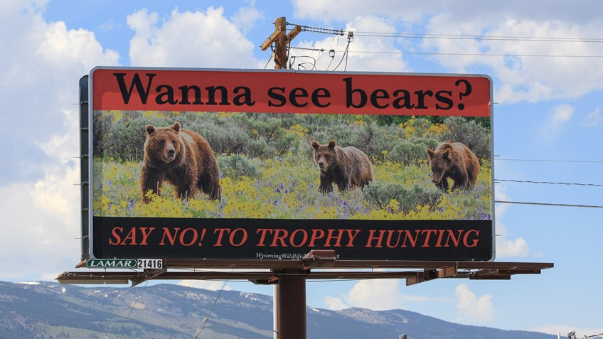 Anti-Bear-Hunting Billboard Targets Yellowstone Park