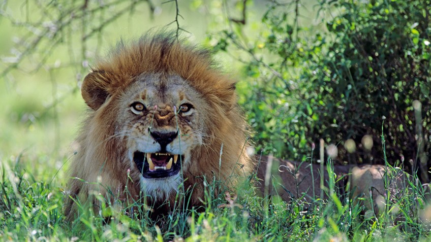 Lying about Lions—Fake News Exposed As Hunters Fight Fiction with Facts