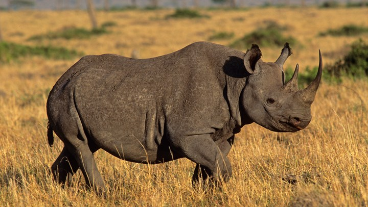 PHASA Supports International Trade in Rhino Horn