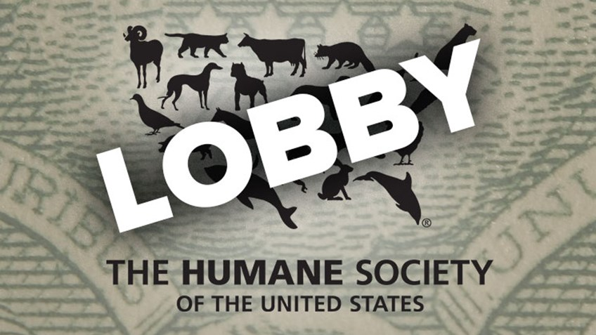 "HSUS Ruled a ""Lobbying"" Organization"
