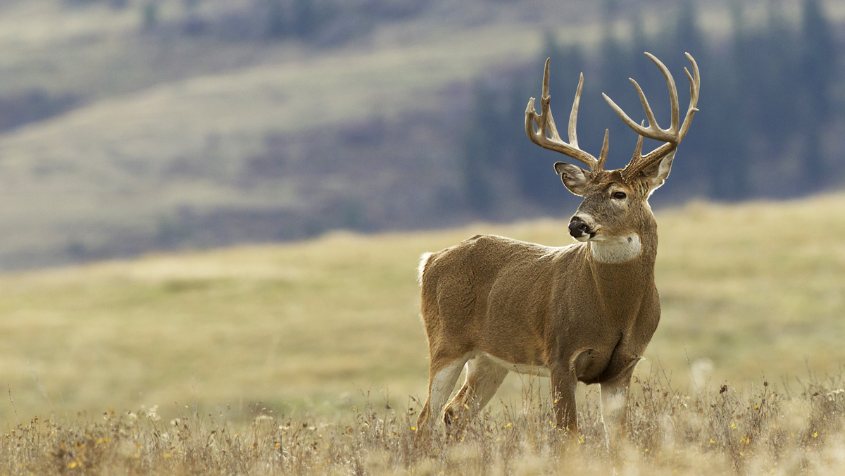 Know Your State's Rules Regarding CWD