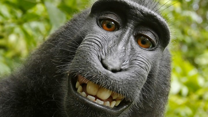 "PETA and Photographer Settle ""Monkey Selfie"" Lawsuit"