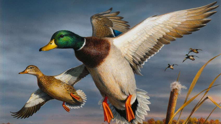 Hunters Are Biggest Winners in the Federal Duck Stamp Contest