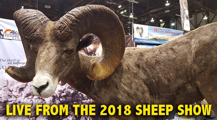 Sheep Show Pulls Together Friends in High Places
