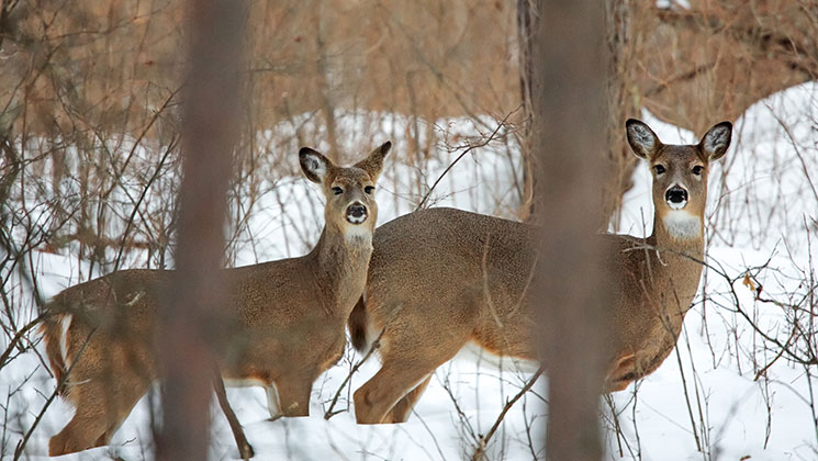 Landmark CWD Deer Study Breaks New Ground in Wisconsin