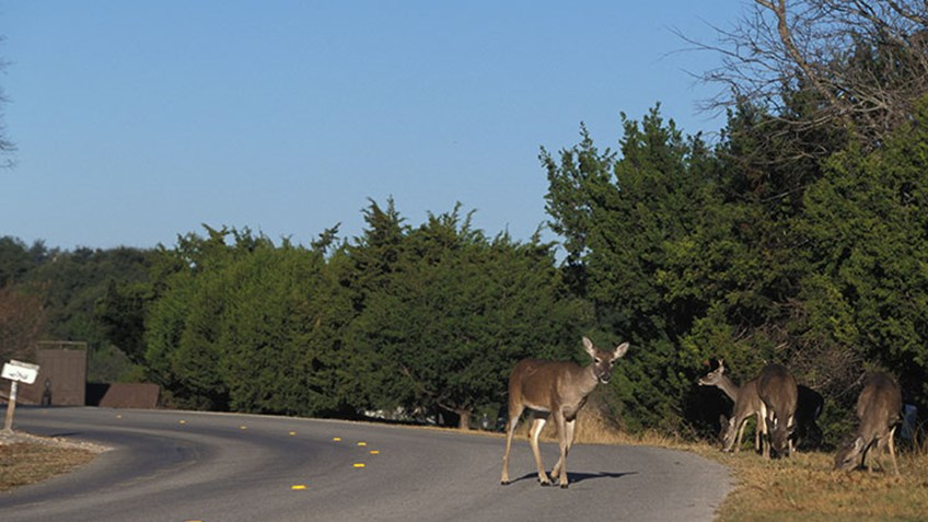 Hunters: The Free Solution to Managing Urban Deer