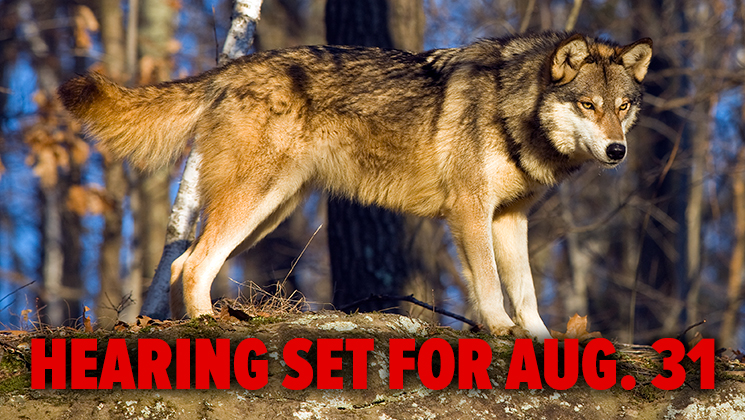Antis Force Washington State Judge to Halt Wolf Control