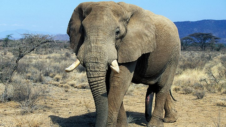 87 Elephants Poached Near Botswana Elephant Sanctuary