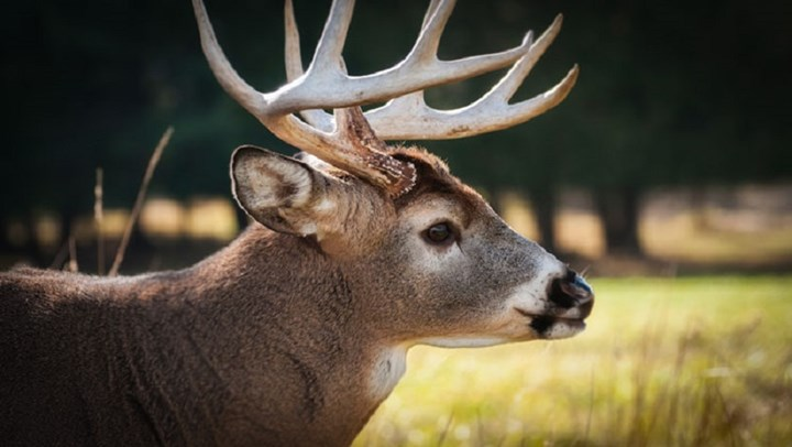 Delaware Expands Sunday Hunting