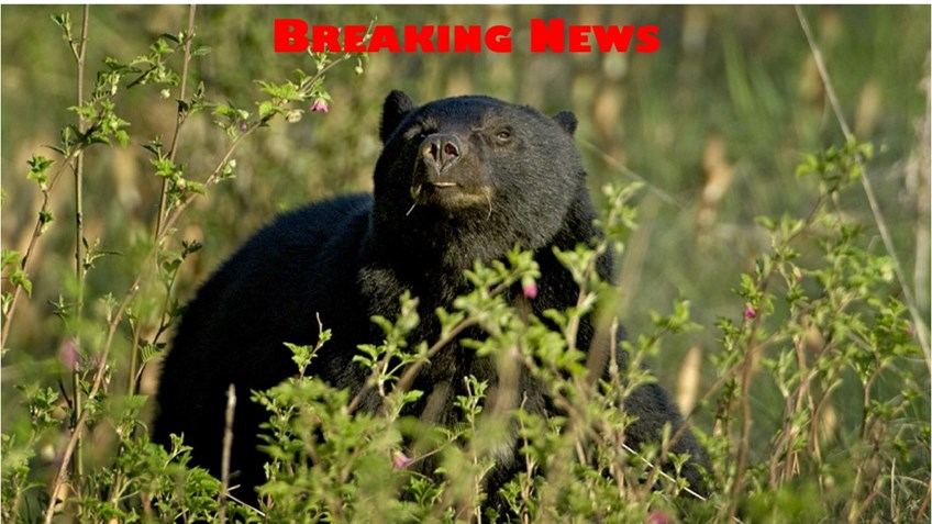 New Jersey Hunters Sue Governor Over Bear Hunting Ban