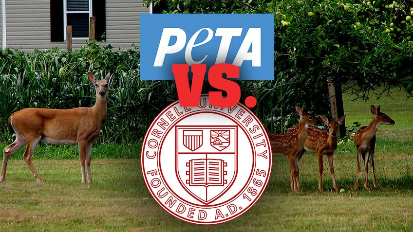 PETA to Cornell University: Deer over People!
