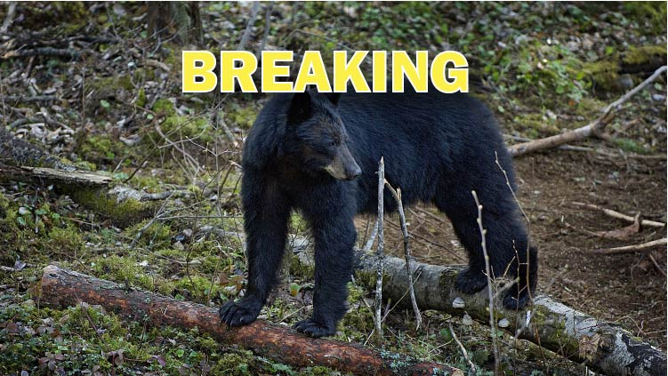 New Jersey Black Bear Hunt Ban Upheld on Appeal