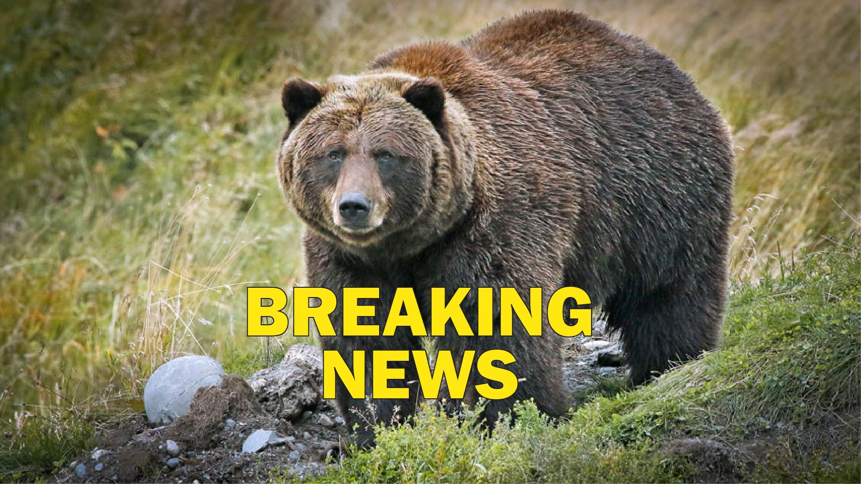 A Grizzly Double Homicide in the Yukon