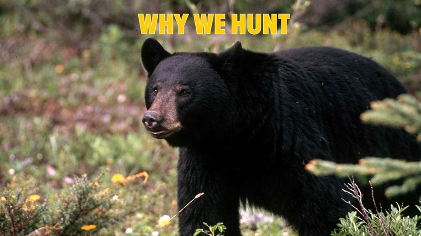 The Hardest Thing of All to Explain About Hunting