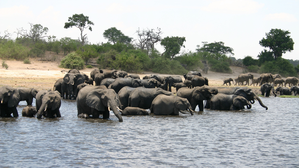 Botswana Lifts Hunting Ban