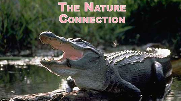 The Surest Way to Create Future Wildlife Conservationists