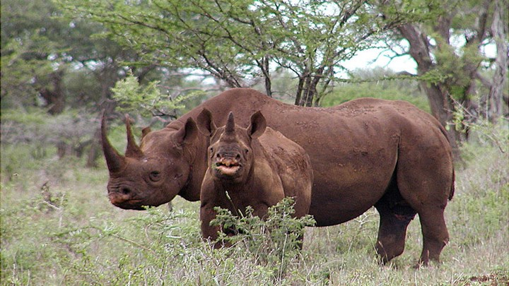 Two Suspected Rhino Poachers Killed in Botswana