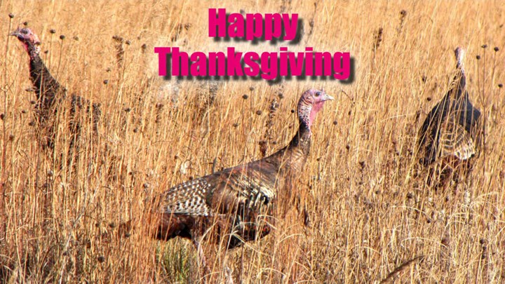 Happy Thanksgiving from NRA Hunters' Leadership Forum