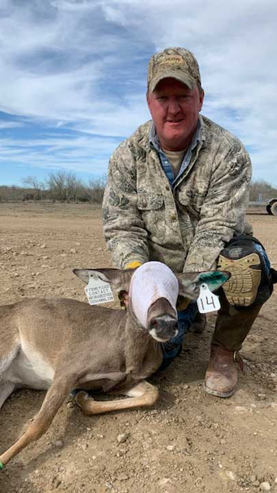 Macy Ledbetter assisted in a plan to trap and translocate deer into an area that lost its herd due to a severe anthrax breakout.