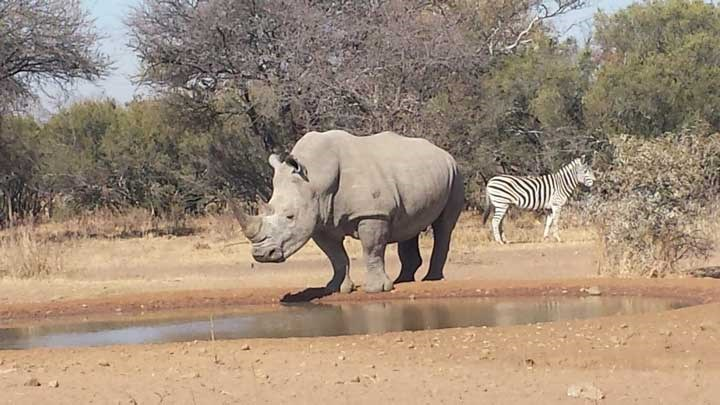 Poachers Assassinate Rhino Poaching Investigator in South Africa