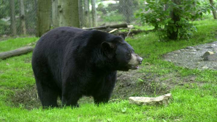 What Does New Jersey's Pope-And-Young Record Black Bear Mean?