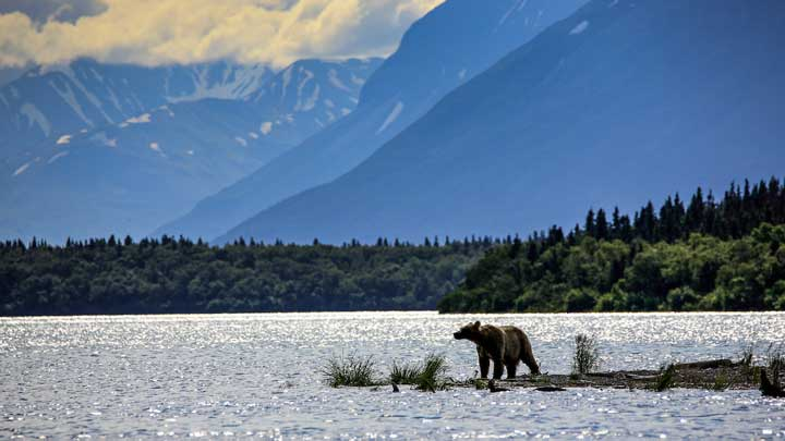 The author was not able to hunt on this trip to Alaska, but he hopes to try bear meat for himself on his next trip. (Image by Keith Crowley.)