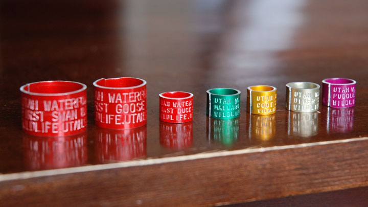 waterfowl bands