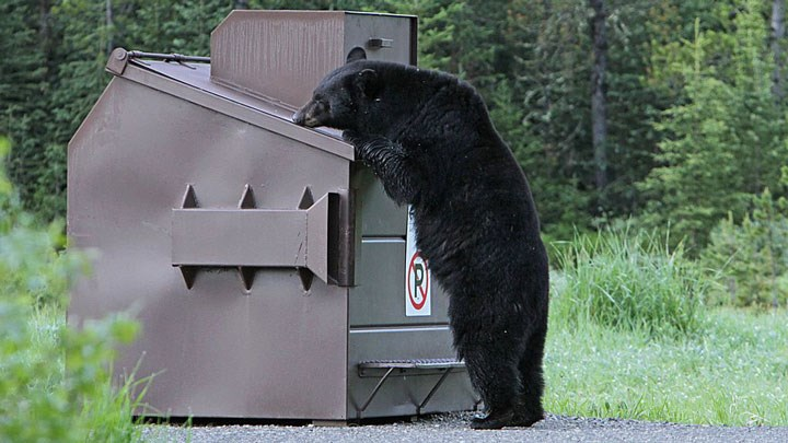 Black Bear Trapped and Destroyed after Mauling a New Jersey Resident